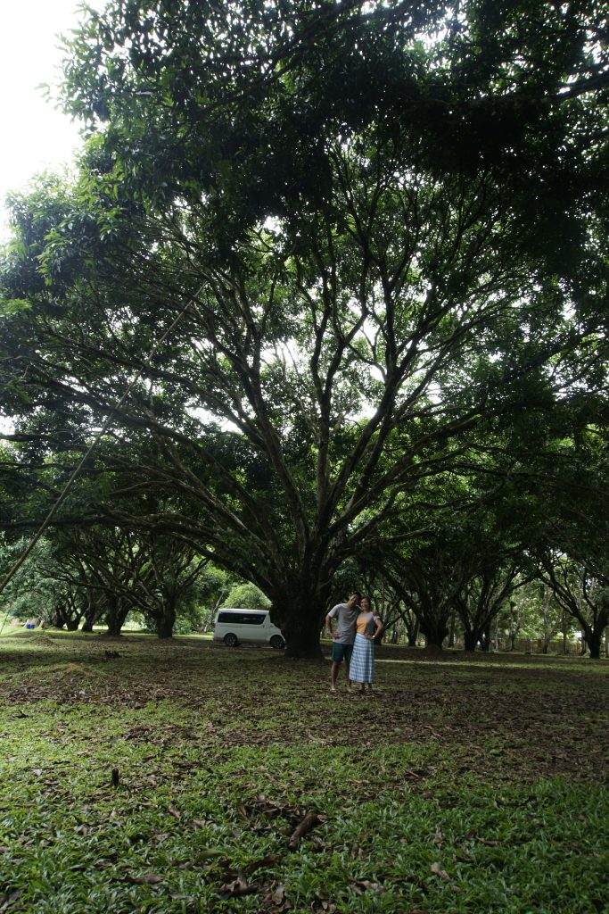 Mango Research Center in Guimaras Island