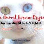 Mayari Animal Rescue Organization (MARO)
