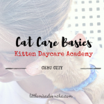 Cat Care Basics During Mini Workshop in Kitten DayCare Academy