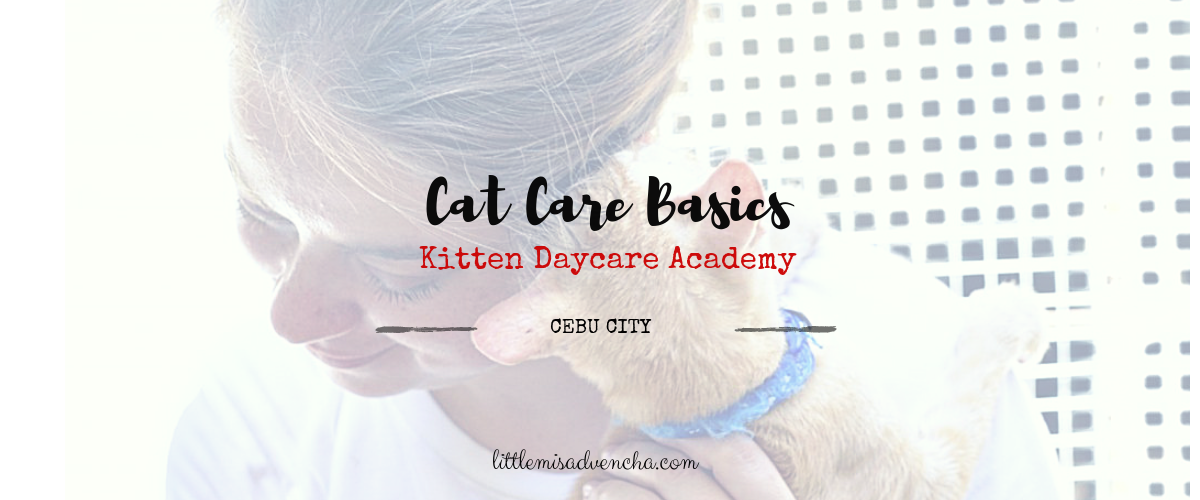 cat care basics littlemisadvencha