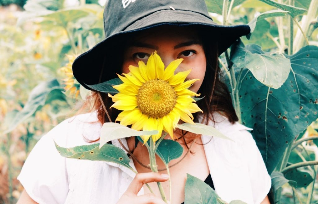 sunflower garden in dalaguete